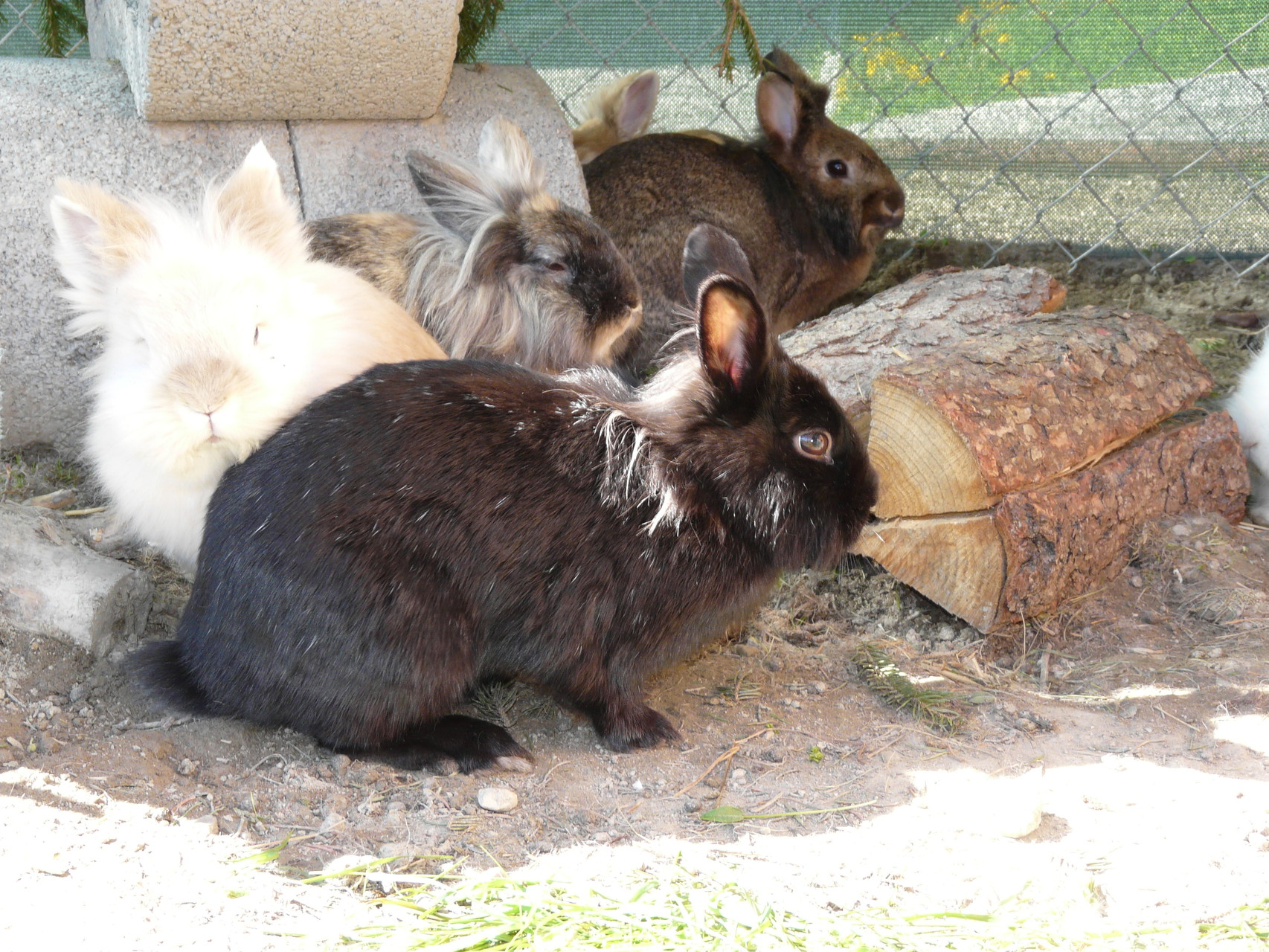 Our bunnies in the garden