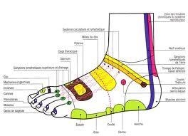 réflexologie zones face dorsale pied gauche