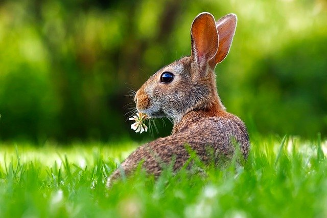 Ein frohes Osterfest ... Saison-Eröffnung am 10. April 2021