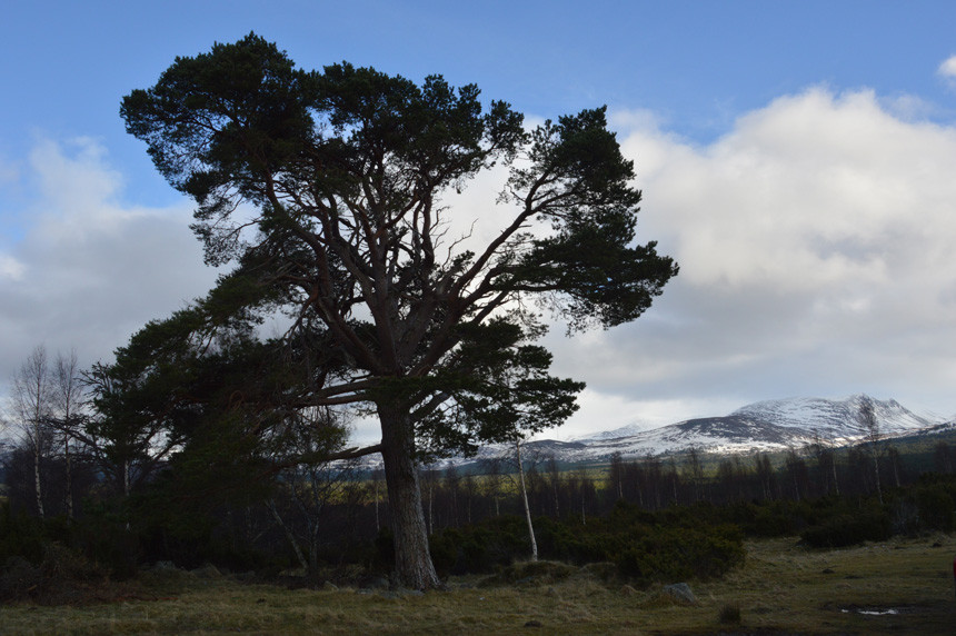 Cairngorms from near Aviemore.