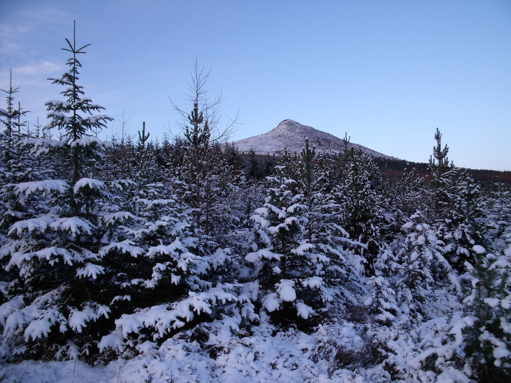 Bennachie  Snowy Pines
