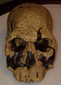 Homo rudolfensis - Lago Turkana