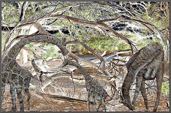 Giraffe. Rilievo in pietra nel Parco Nazionale Sibiloi nel nord del Kenya