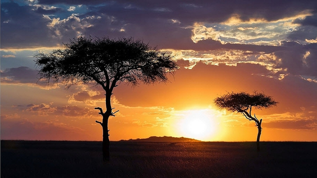 Sunset in the african savannah