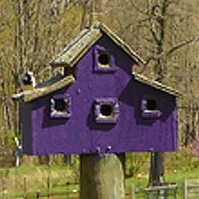 Purple Rooster Organics purple birdhouse
