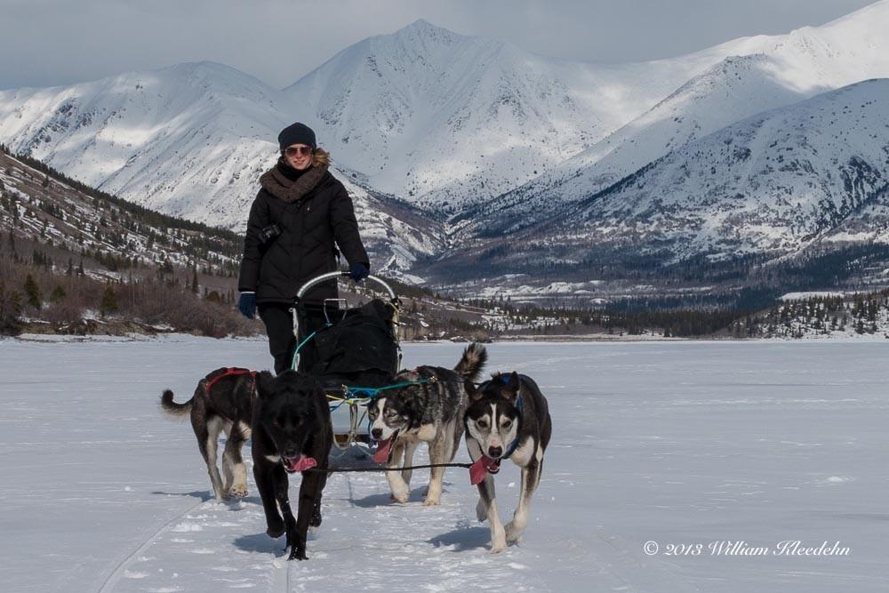 Sur le lac gelé du Lac Bennett, avec mon attelage de chiens