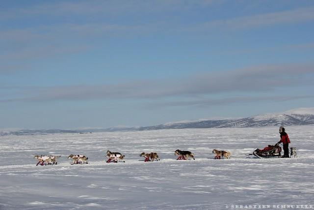 Les lacs gelés et enneigés du Yukon sont le terrain de jeux préféré des chiens de traîneaux.