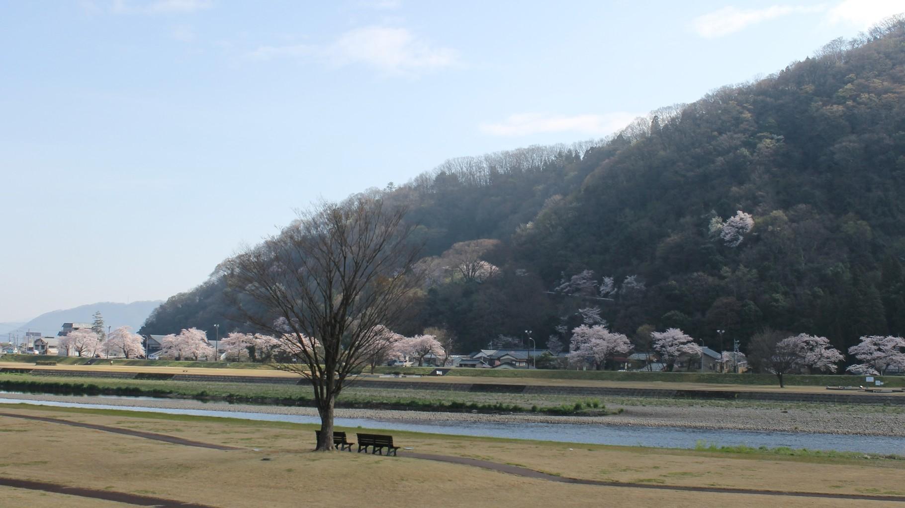 (春) 住宅近くの桜がきれいな日野川緑地公園と村国山