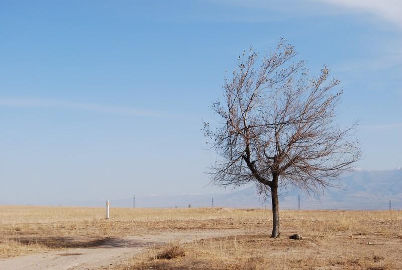 sur la route de Samrcande a Jizzakh