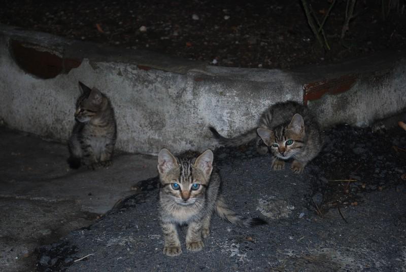 j aıme mıeux les chats