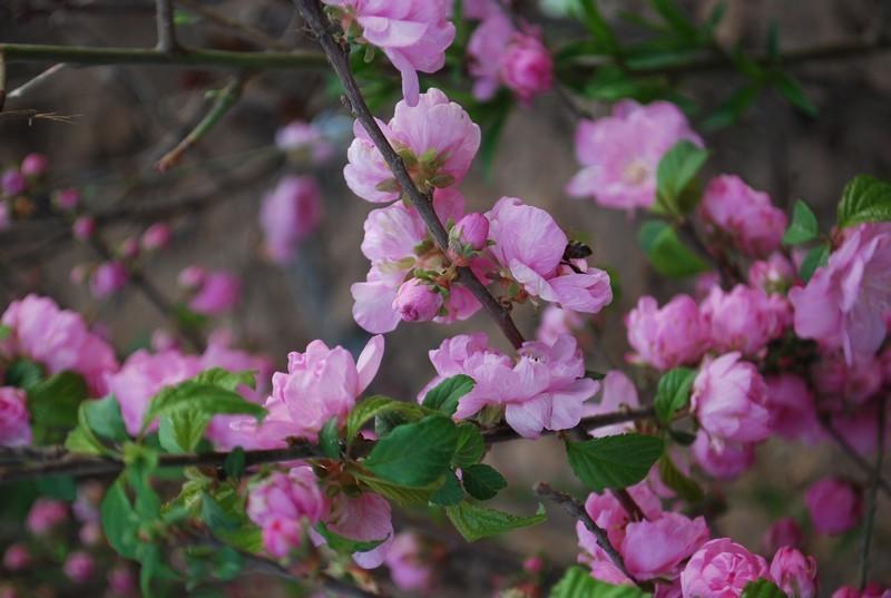 Turpan, c'est le printemps