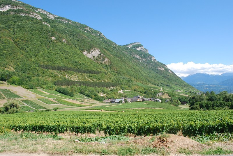 Les vignes de Chignin