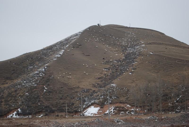 montagne de moutons