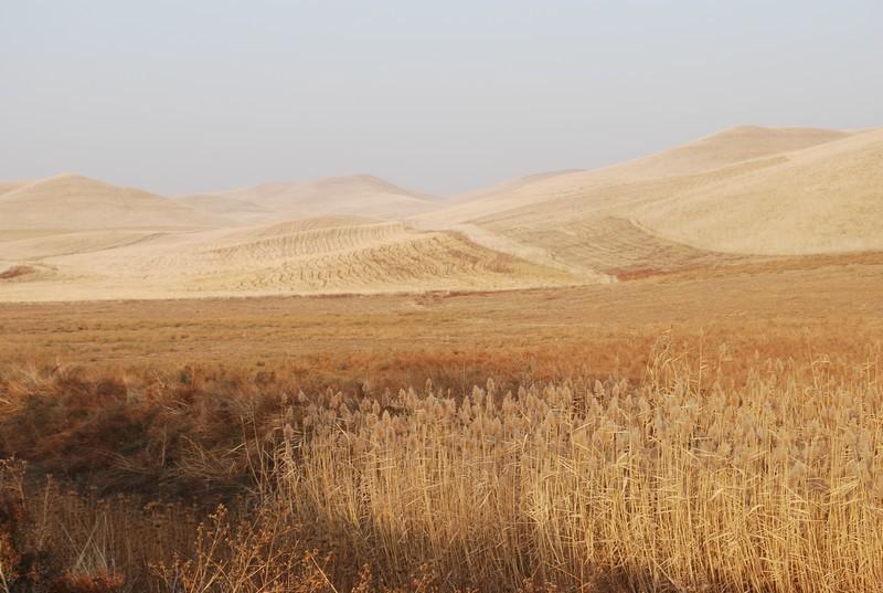 longue etape jusqu a Shimkent, fin du jour