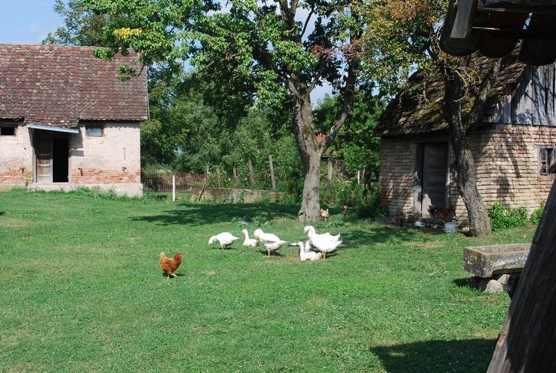 ... une Croatie rurale, et plus d'animaux que dans un conte.