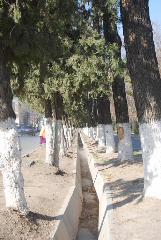 la rigole meurtriere, le tronc en blanc, une femme qui balaie, l Asie centrale