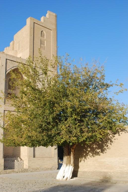 Chor-Bakr, necropole a quelques km de Boukhara, avant d y arriver depuis le sud