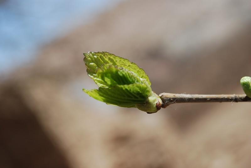 printemps, cette fois c'est sur !