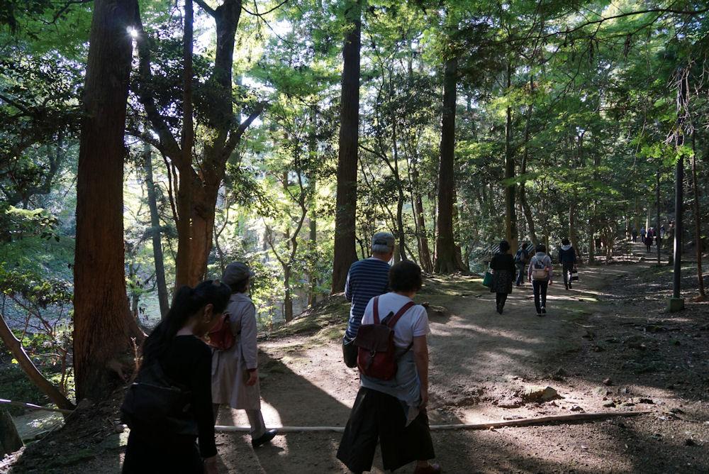 木陰が美しい杉木立の山道、円教寺目指して歩きます。