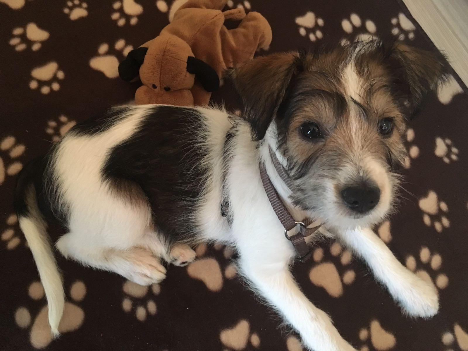 Clara 9,5 Wochen alt