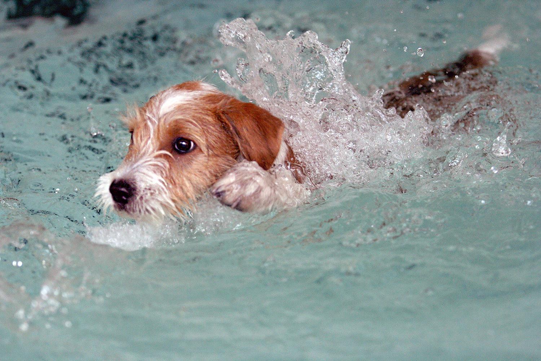 Kathi vom Strithorst schwimmt :)