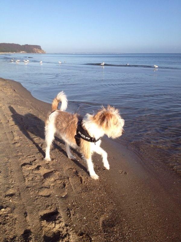 Asti 9 Monate im Urlaub das Meer erkunden :)