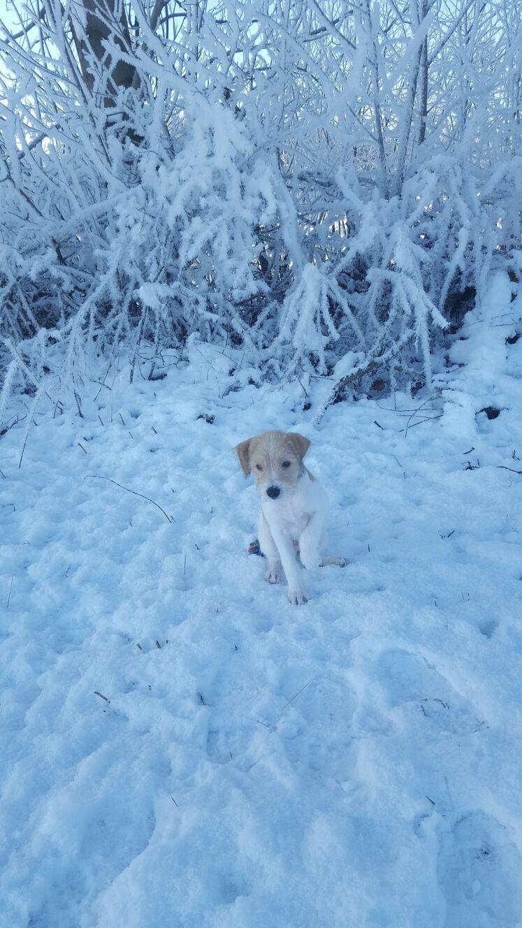Cappa 11,5 Wochen sein erster Schnee