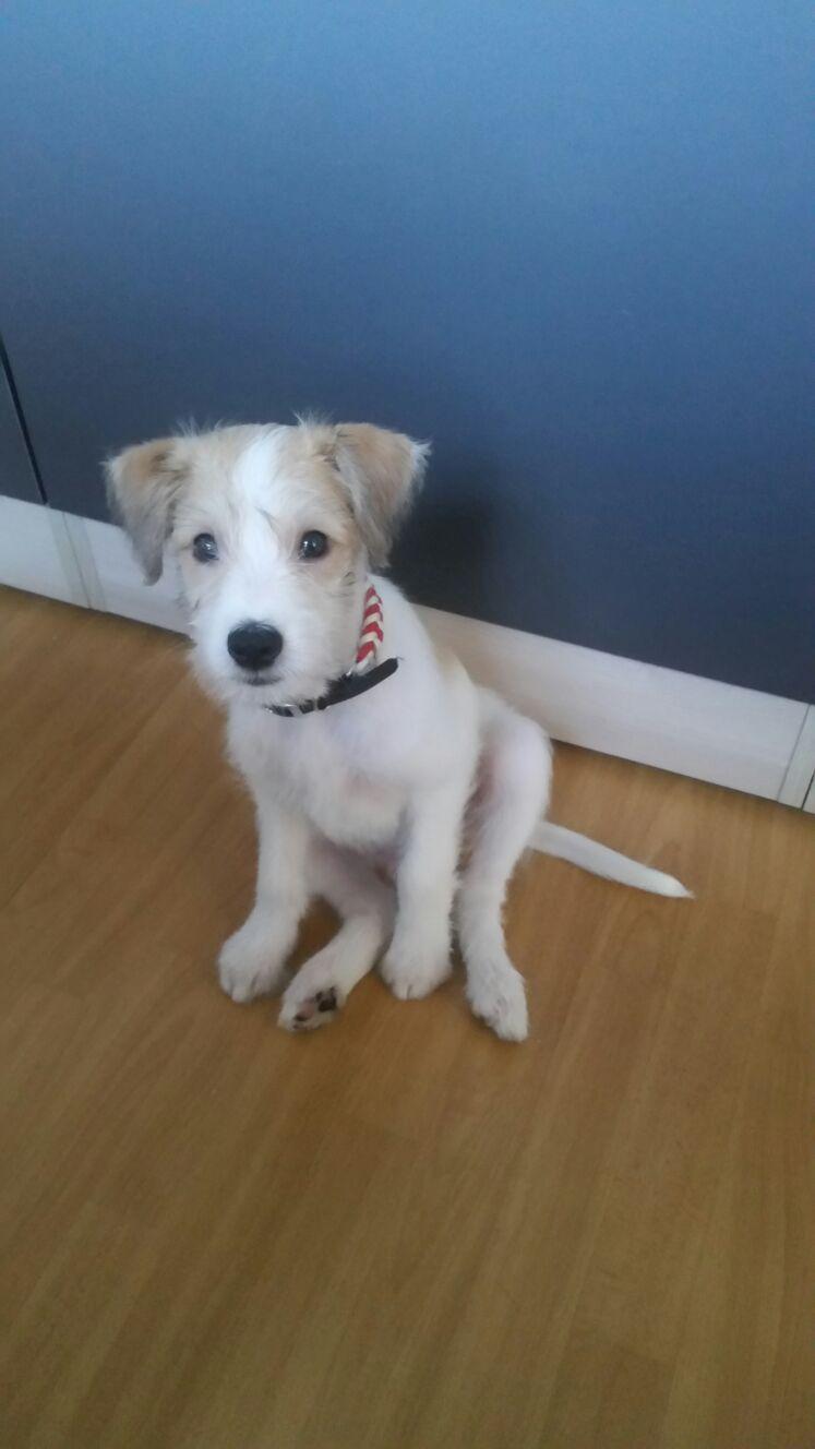 Cooper 10 Wochen alt