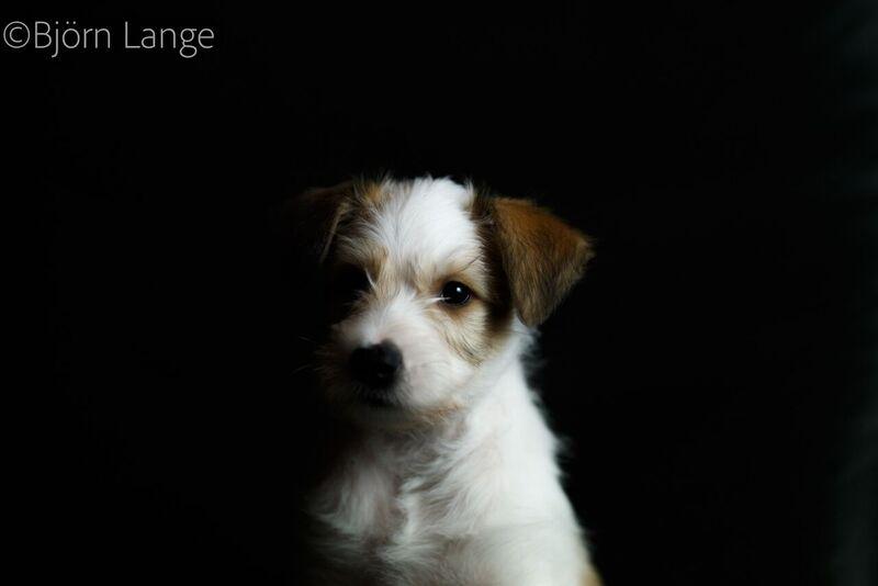 Charly 8 Wochen alt