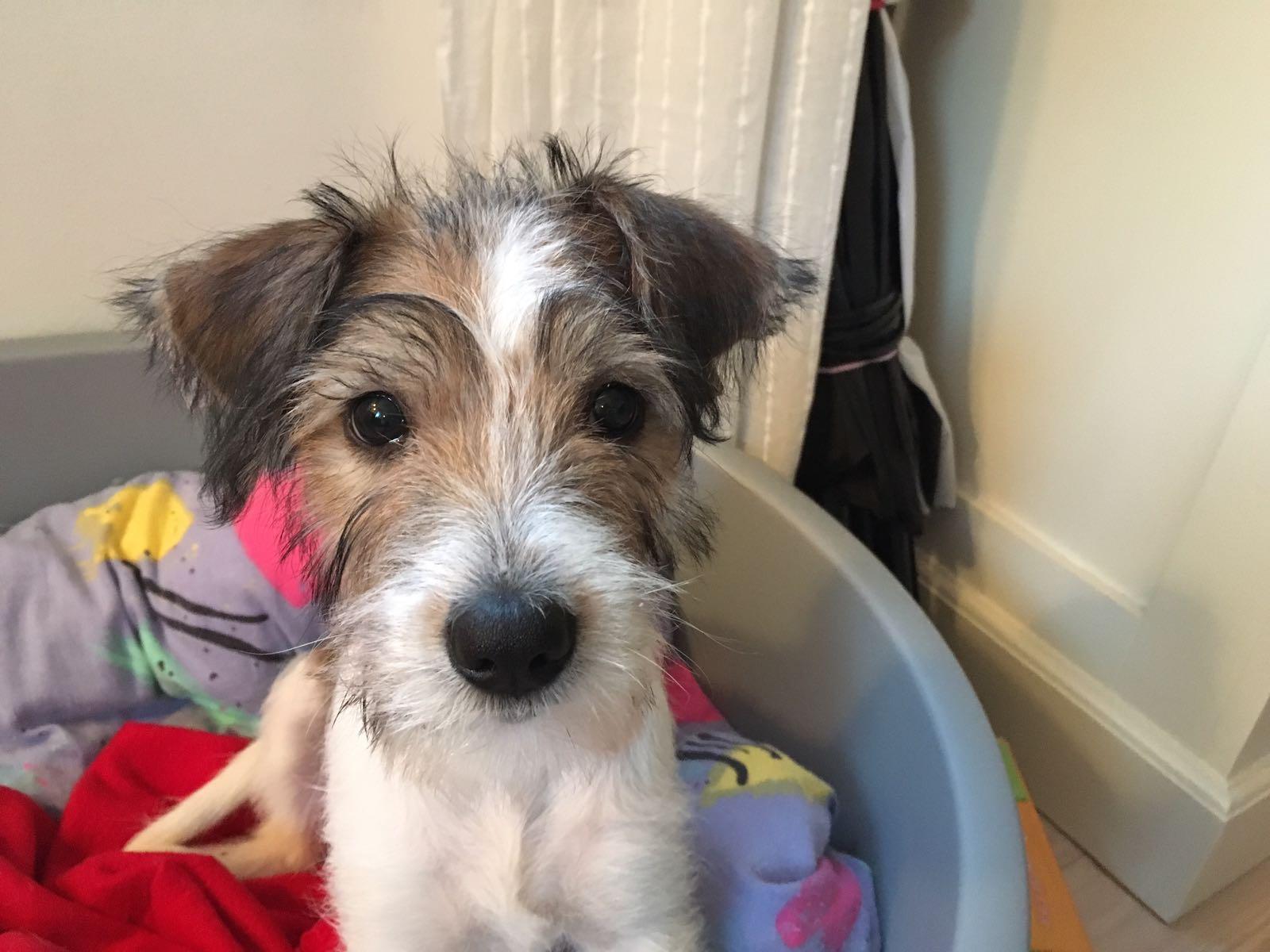 Clara 12 Wochen alt