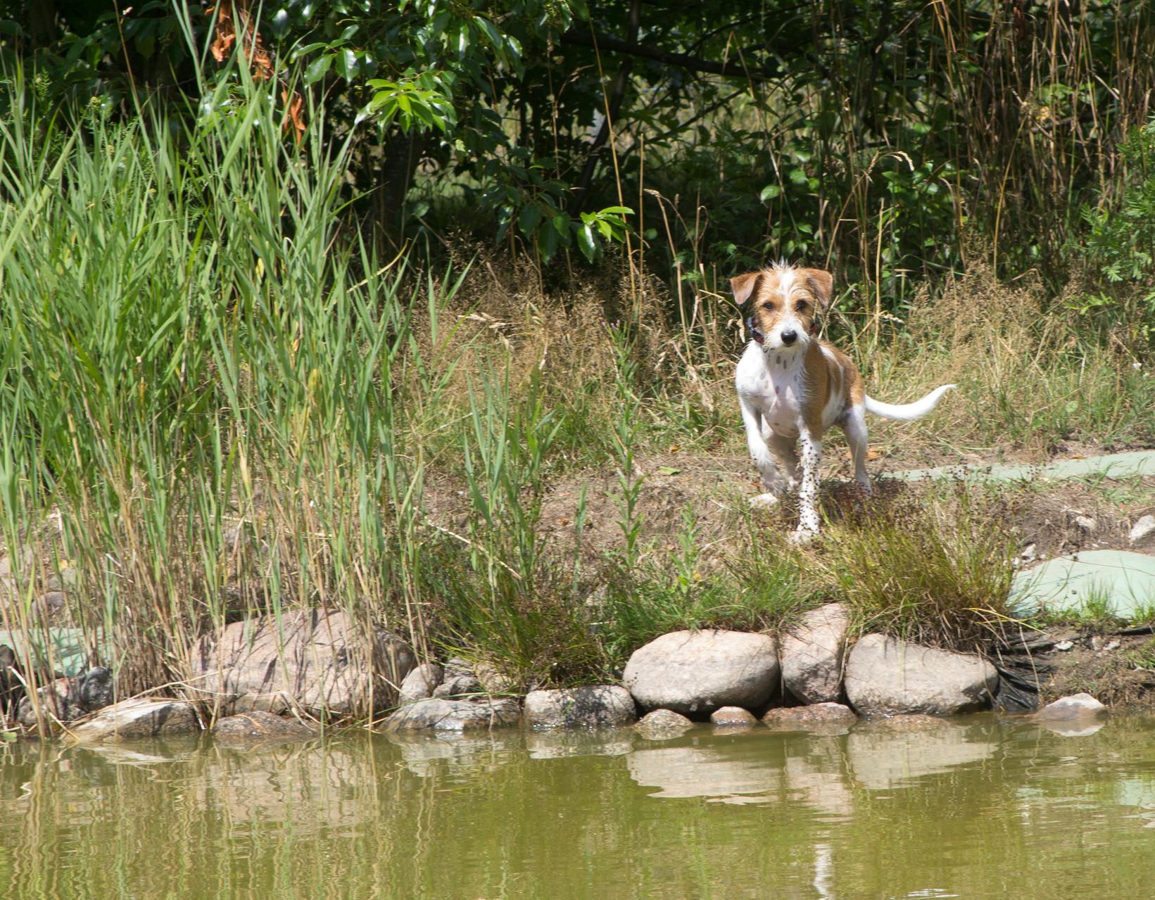 Kaja schaut noch vorsichtig vom Ufer zu