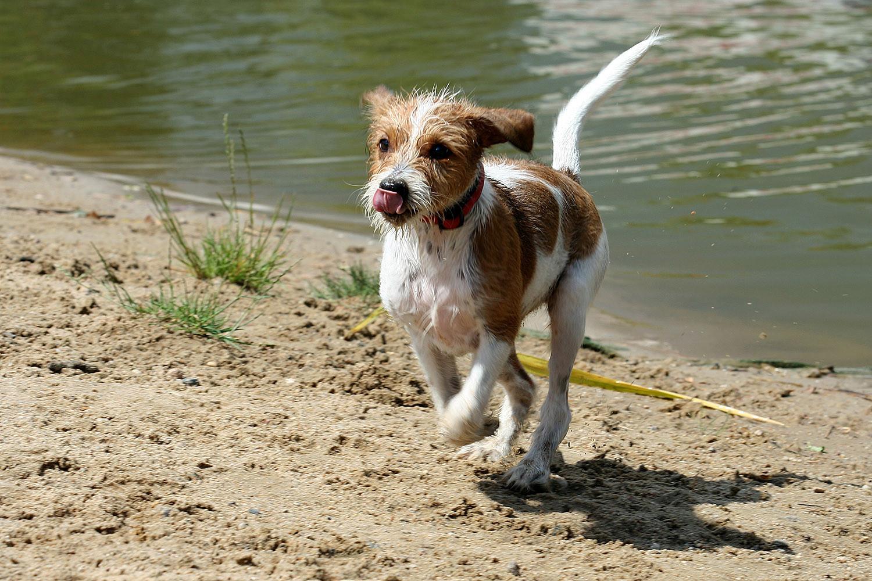Kathi vom Strithorst tobt am Wasser :)