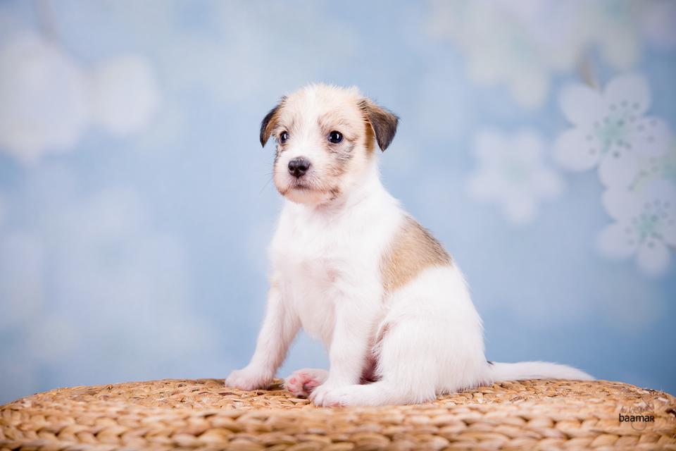 Charming Dexter vom langen Fuchsbau 5 Wochen alt