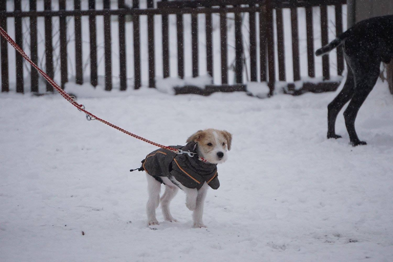 Cooper das erste Mal in der Hundeschule