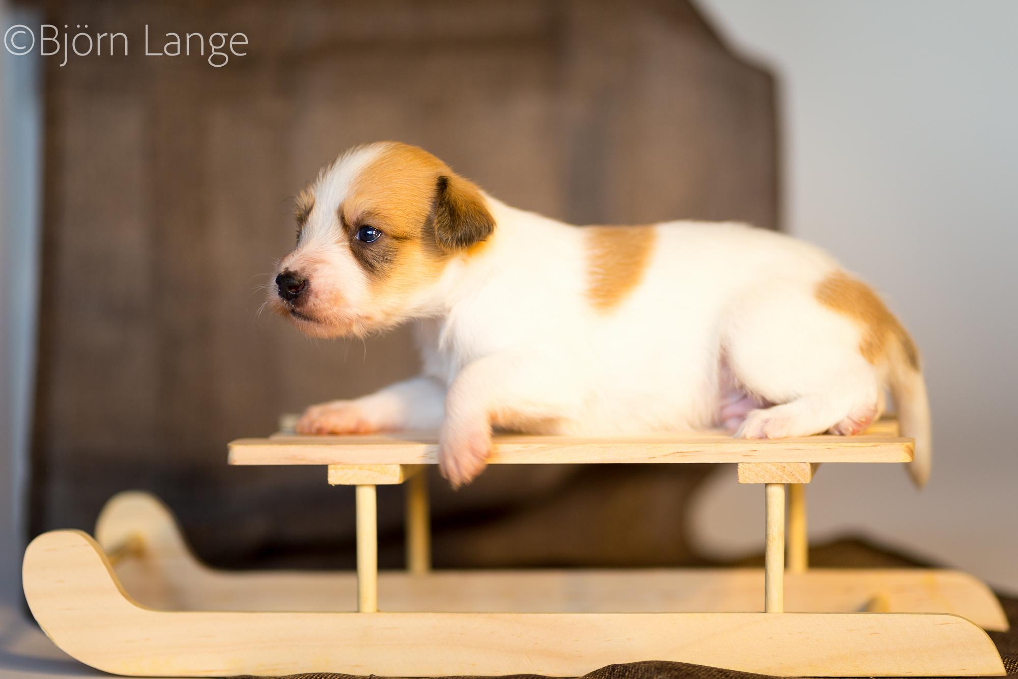 Cooper 3 Wochen alt