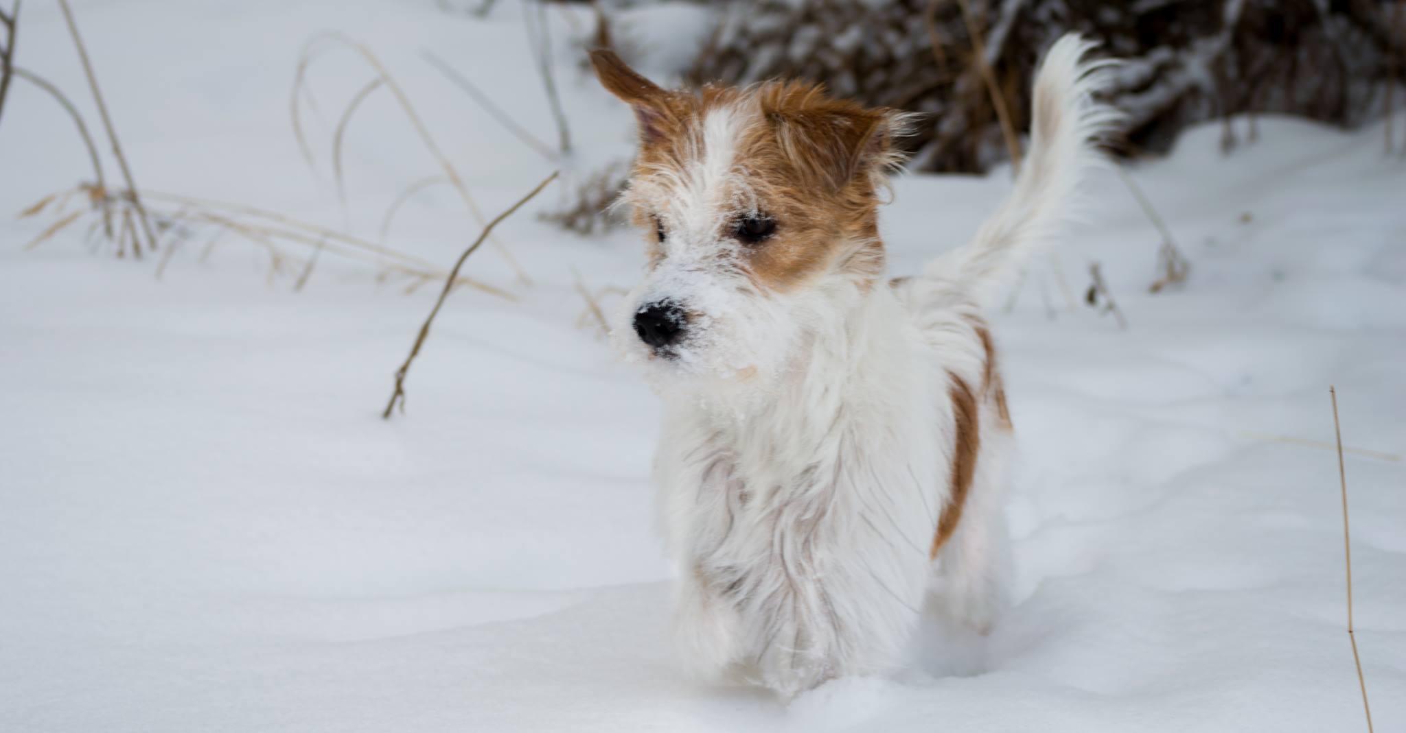 Sansa erster Schnee