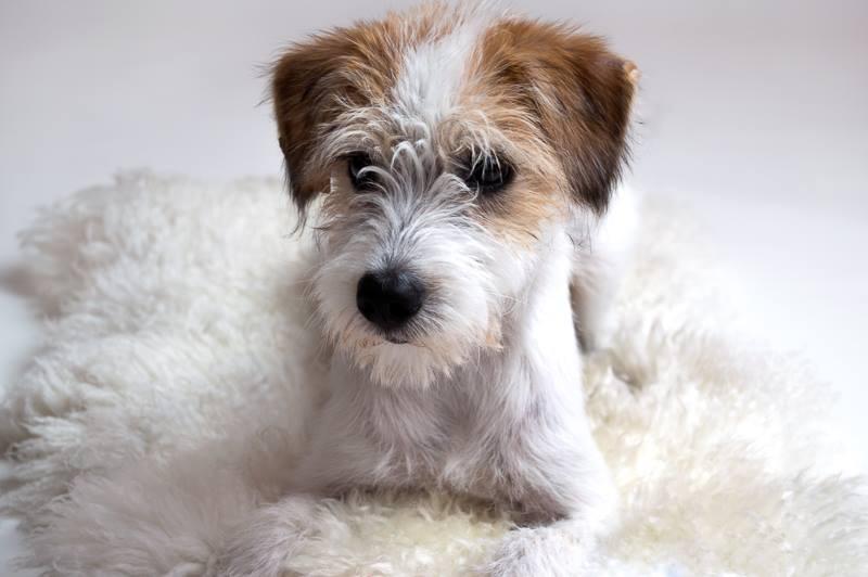 Benjie-Sansa 4,5 Monate
