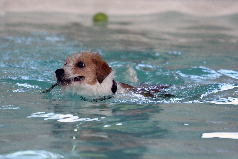 Avanti bringt das Stöckchen ausm Pool