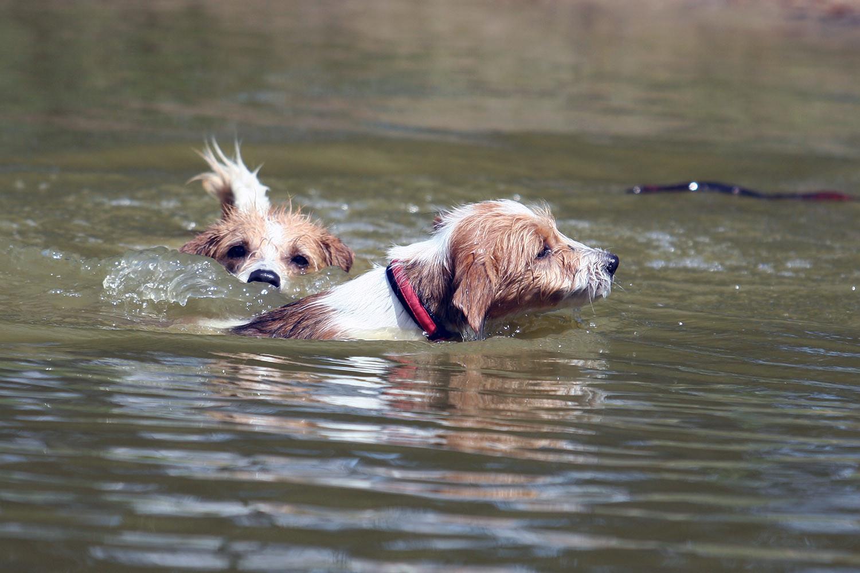 Avanti passt auf Kaja im Wasser auf