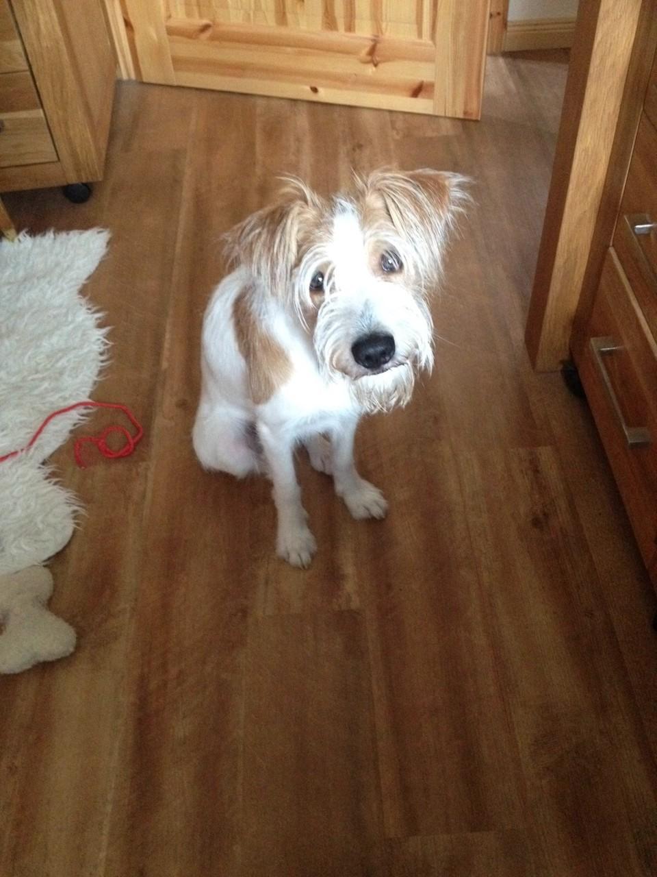 Ben-Rufus mit 9 Monaten