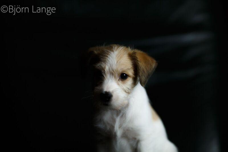 Cooper 8 Wochen