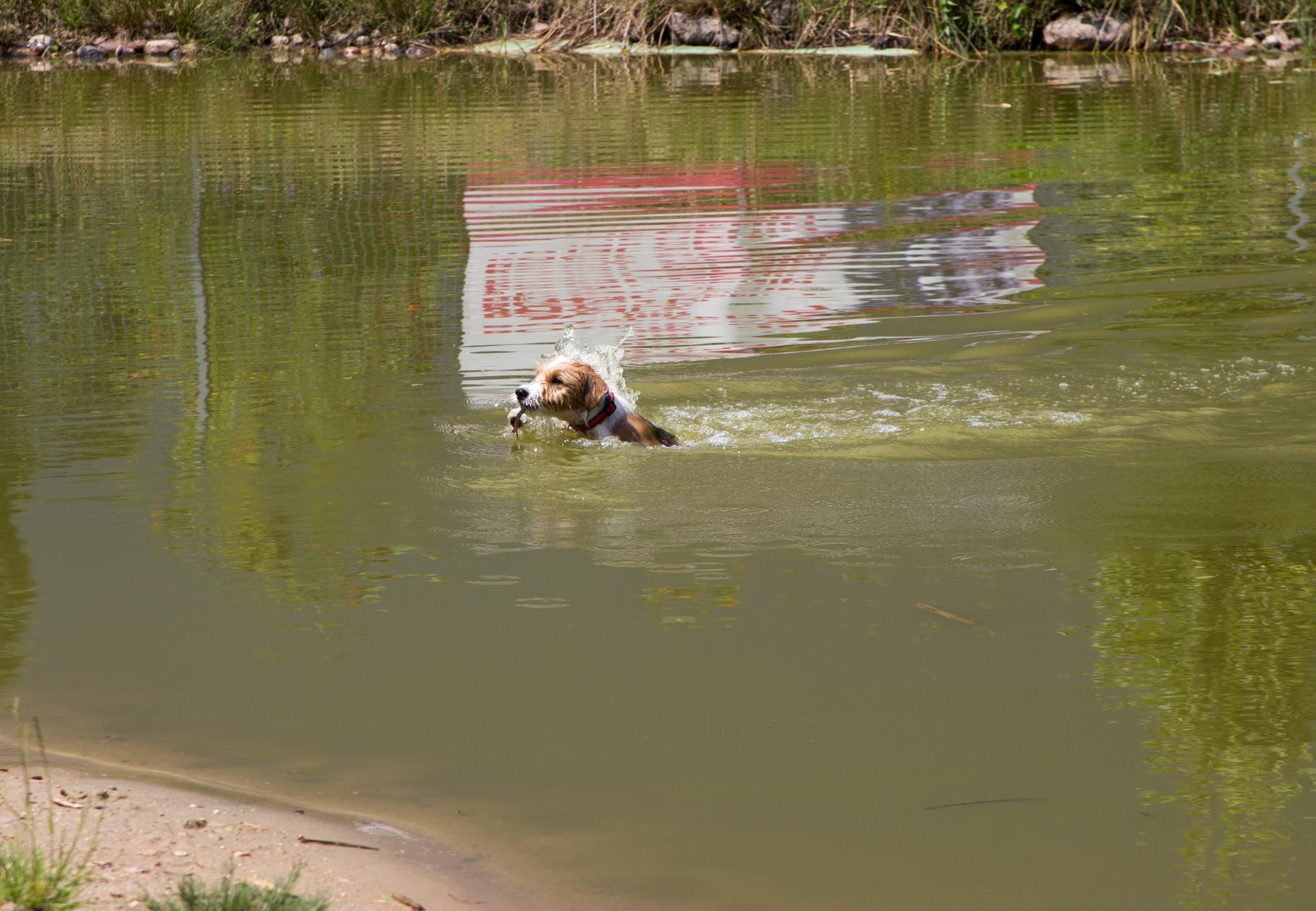 dann war se plötzlich drin und schwimmt über den See