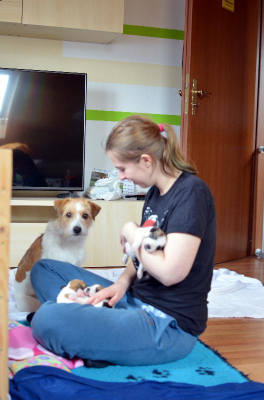 Sabrina mit Avanti und 3 Welpen