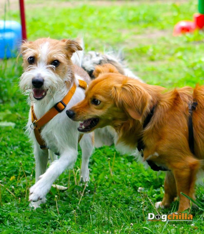 Anni in der Hundeschule 1 Jahr