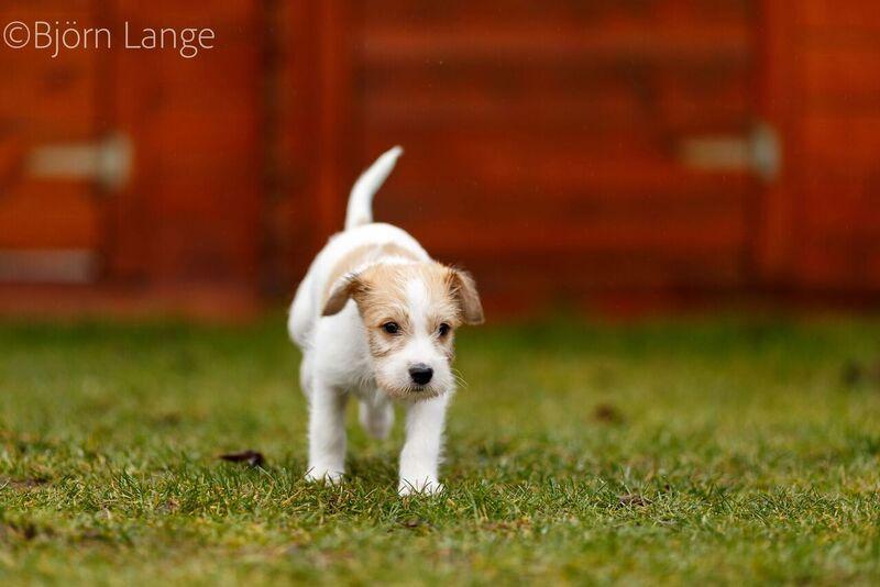 Cooper 7 Wochen alt