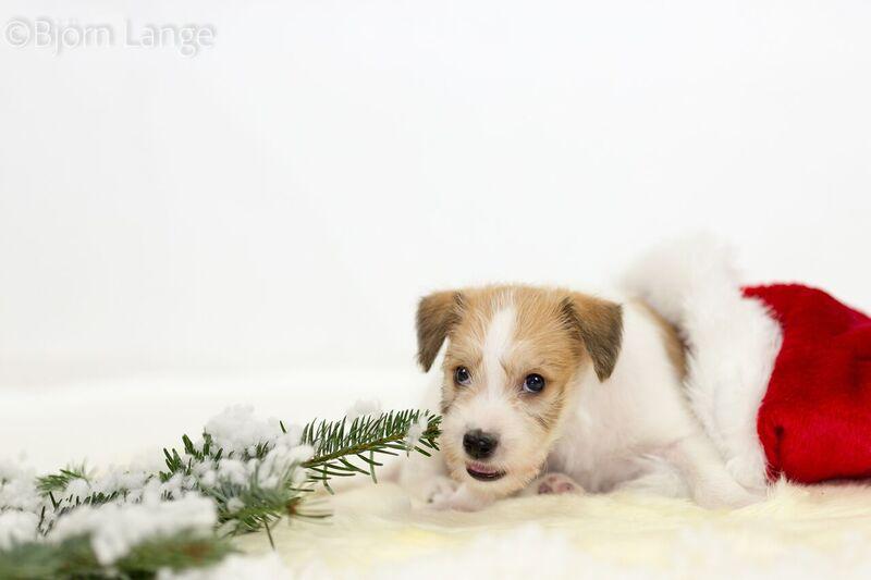 Cooper 6 Wochen