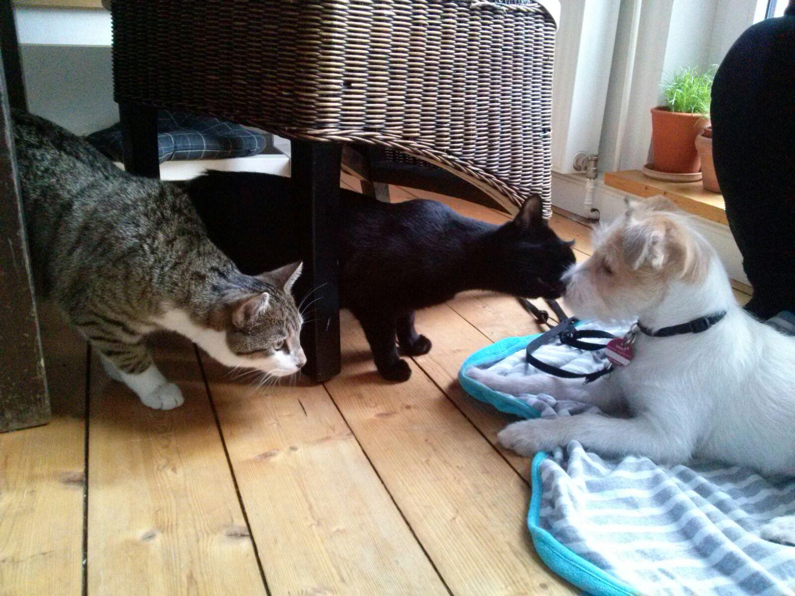 Charlotte 11 Wochen lernt Katzen kennen