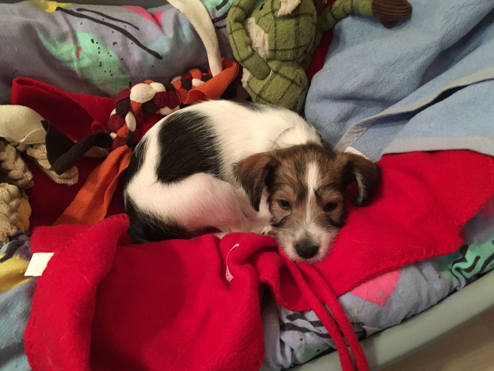 Clara 9 Wochen alt