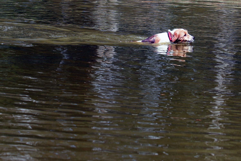 Kathi vom Strithorst schwimmt das erste mal über einen kleinen See :)