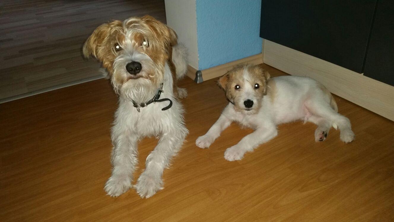Branko und Cooper